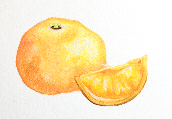 oranges - progress shot of watercolor pencil layer